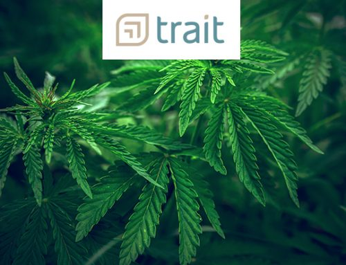The Road Ahead for Cannabis Production