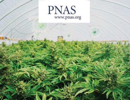 Inner Workings: Genomics blazes a trail to improved cannabis cultivation