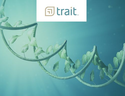 Trait Biosciences Announces Successful Stable Transformation of a Hemp Plant