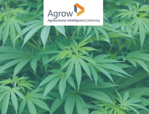 Trait Biosciences progresses on GM hemp